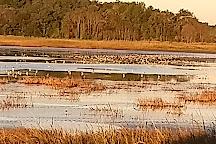 Bombay Hook National Wildlife Refuge, Delaware, United States