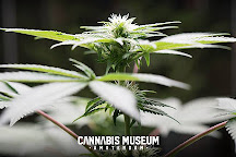 Cannabis Museum Amsterdam, Amsterdam, The Netherlands
