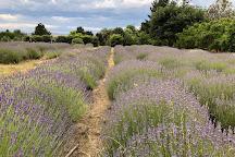 Crystal Brook Lavender Farm, Laggan, Australia