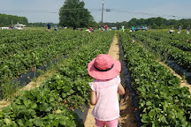 Washington Strawberry Farm, Loganville, United States
