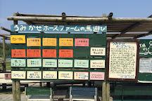 Umikaze Horse Farm, Nanjo, Japan