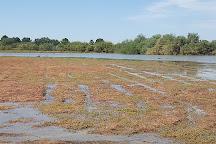 Riparian Preserve at Water Ranch, Gilbert, United States