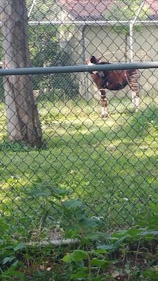 Hoofed Animals chicago USA