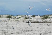 Bald Head Island Conservancy, Bald Head Island, United States