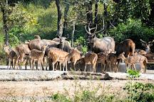 Bannerghatta National Park, Bengaluru, India