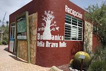 Botanic Garden Comunitario Dra Helia Bravo Hollis, Zapotitlan Salinas, Mexico