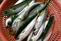 Kanzaiding Fish Market, Ren'ai District, Taiwan