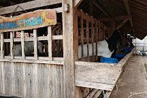 D'Kandang Amazing Farm, Depok, Indonesia