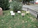 Аллея Славы, улица Пальмиро Тольятти на фото Таганрога