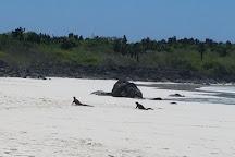 Galapagos Beach at Tortuga Bay, Santa Cruz, Ecuador