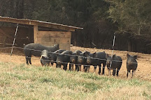 Open Gate Farm, Earlysville, United States