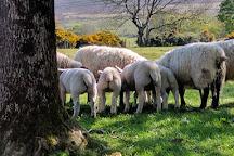 Sheans Horse Farm, Armoy, United Kingdom