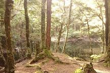 Harwoods Hole Track, Takaka Hill, New Zealand