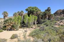 Cottonwood Spring Oasis, Joshua Tree National Park, United States