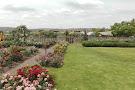 Ludwig's Rose Farm