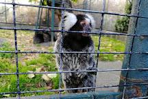 Affen-Zoo Jocksdorf, Neisse-Malxetal, Germany