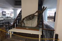 Museo Nacionald de Historia Natural de Cuba, Havana, Cuba