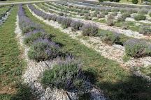 Southern Hills Lavender, Greer, United States