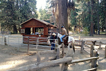 Yosemite Trails Saddle & Sleigh Company, Fish Camp, United States