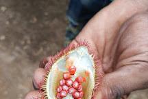 Tangawizi Spice Farm, Stone Town, Tanzania