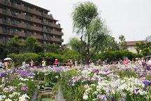 Horikiri Shobu Garden, Katsushika, Japan