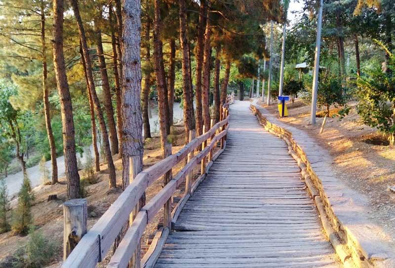 Taleghani Forest Park