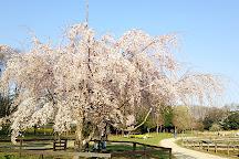 Kitayama Park, Higashimurayama, Japan