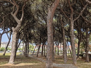 Parque Los Pinares
