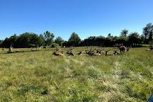 Amber Elk Ranch, Ludington, United States