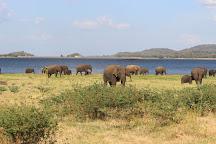Minneriya National Park, North Central Province, Sri Lanka