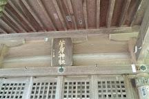 Great sugi of Kayano, Kaga, Japan
