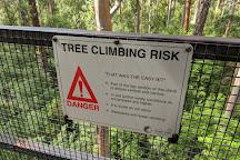 Dave Evans Bicentennial Tree, Pemberton, Australia
