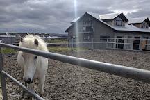 Viking Horses, Reykjavik, Iceland