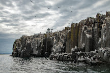 Farne Islands, Northumberland, United Kingdom