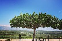 Winery Stilianou, Kounavi, Greece