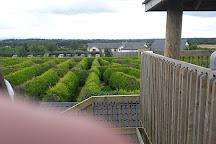The Kildare Maze, Kildare, Ireland
