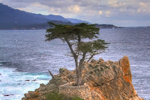 Lone Cypress, Pebble Beach, United States