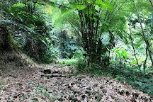 Nanny Falls, Moore Town, Jamaica