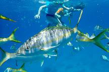 St.Thomas Scuba and Snorkel Adventures, St. Thomas, U.S. Virgin Islands