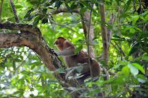 Kuching Wetlands National Park, Kuching, Malaysia