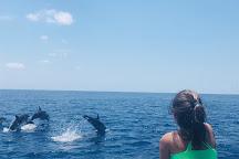 The Divine Dolphin, Drake Bay, Costa Rica