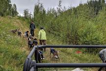 Dream a Dream Premier Iditarod, Willow, United States
