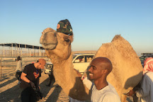 Q-Explorer Tourism, Doha, Qatar