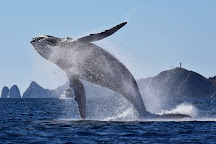 Whale Watch Cabo, Cabo San Lucas, Mexico