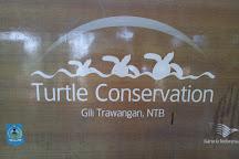 Gili Trawangan Turtle Hatchery, Gili Trawangan, Indonesia