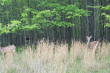 Wheaton Regional Park, Silver Spring, United States