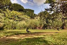 Bosque dos Buritis, Goiania, Brazil
