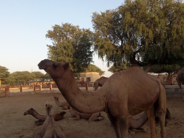 National Research Centre on Camel