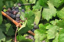Sde Boker Winery, Sde Boker, Israel