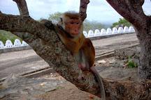 Rangiri Dambullu Maha Viharaya, Dambulla, Sri Lanka